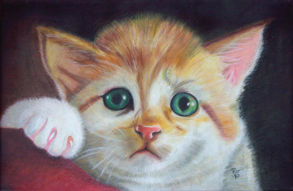 38_Anche-i-gatti